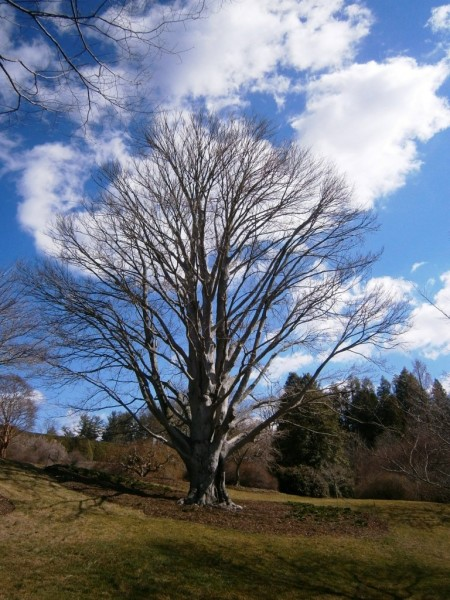 Dreveščki