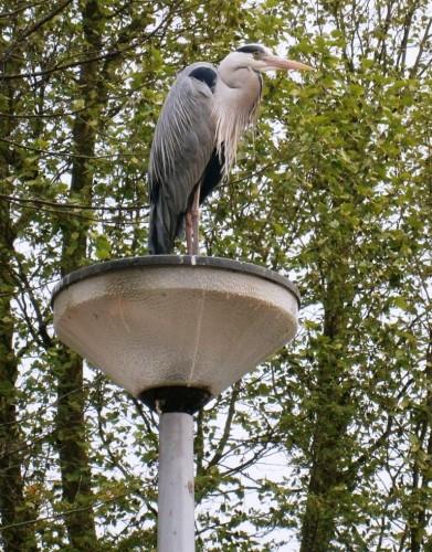 Ptica na kandelabru