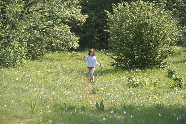 Cvetoči travniki nad gozdom