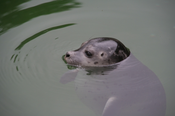 Mladič tjulna