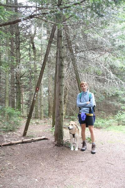 Vrh je skrit v gozdu