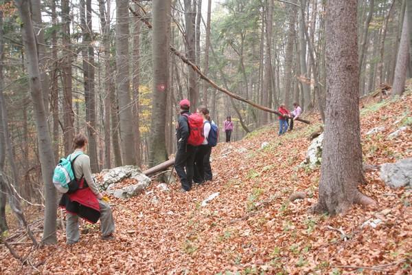 Pot skozi jesenski gozd