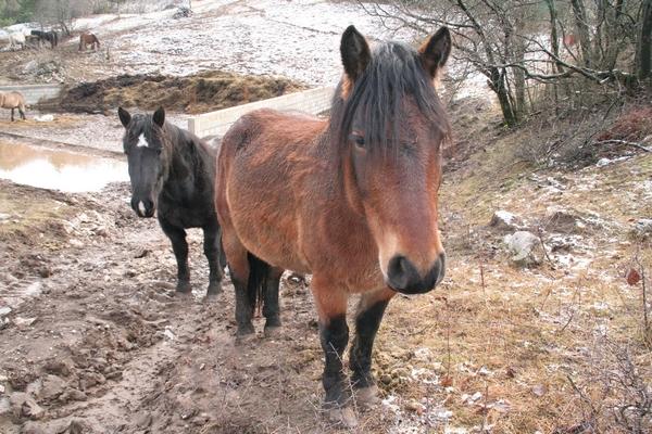 Konji na odcepu poti