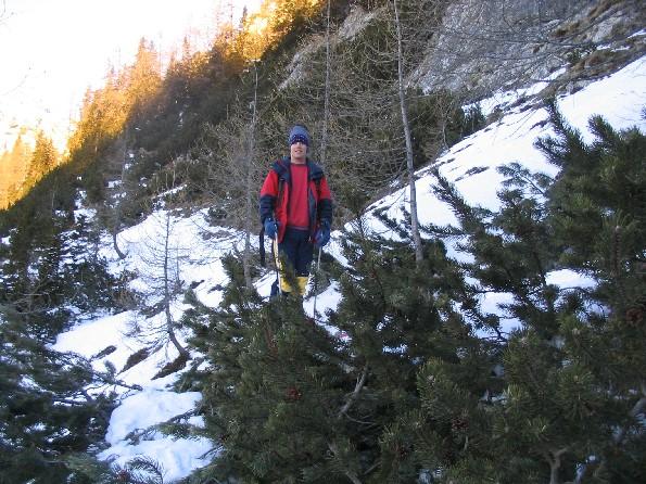 Slog med kombinacijo in gozdarstvom