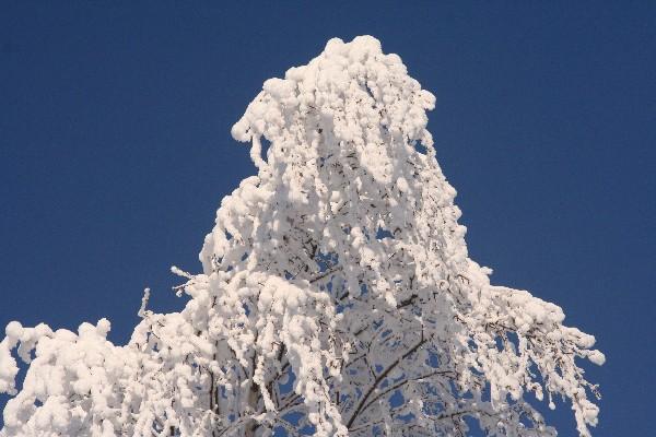 Včasih je snega povsod dosti, samo na tleh ne...