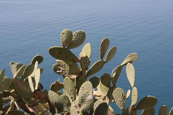 ...med kaktuse???