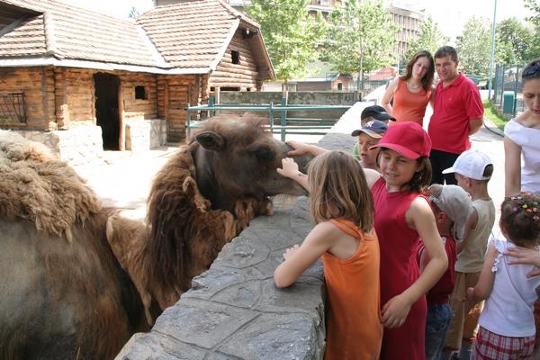 Najbolj zanimivo se je živali dotakniti