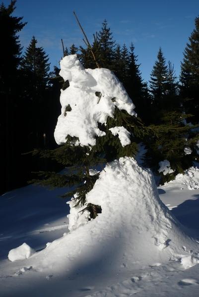 Zimske oblike