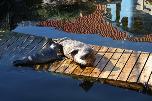 Mladič tjuljnja in mama