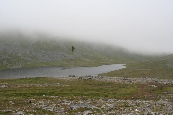 Ptič ob jezeru