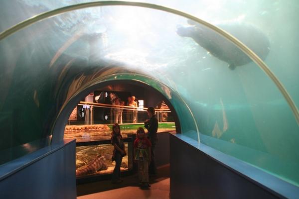 Tunel pod tjulni
