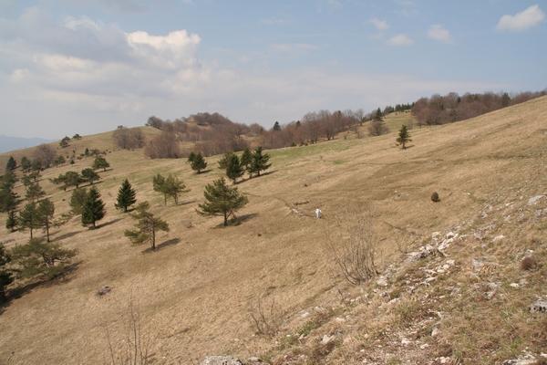 Pobočja pod predvrhom, zadaj Petričev hrib