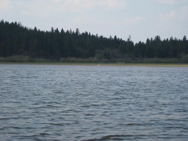 Na jezeru in ob njem vse vrvi od življenja