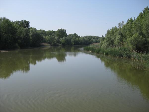 Eden od rokavov Donave