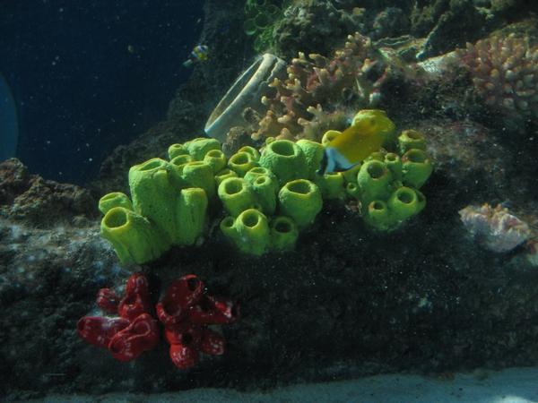Biotop tropskega morja