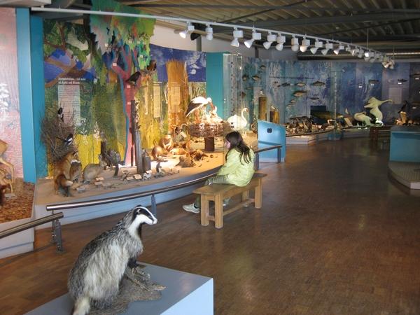 Naravoslovni muzej