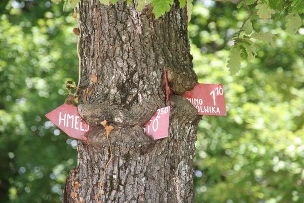 Drevo je požrlo kažipote