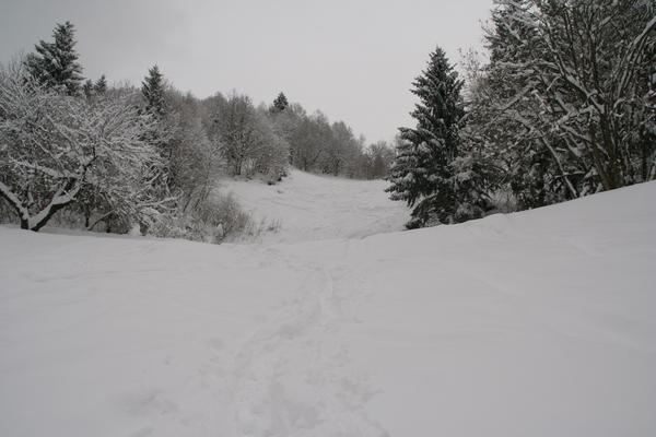 Travniki pod vrhom