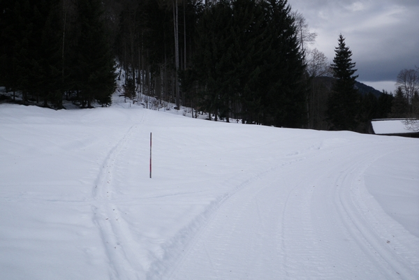 Goljufiva sled