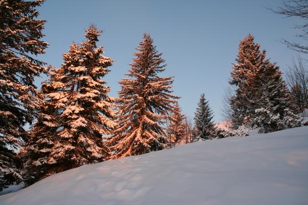 Prehod na travnike