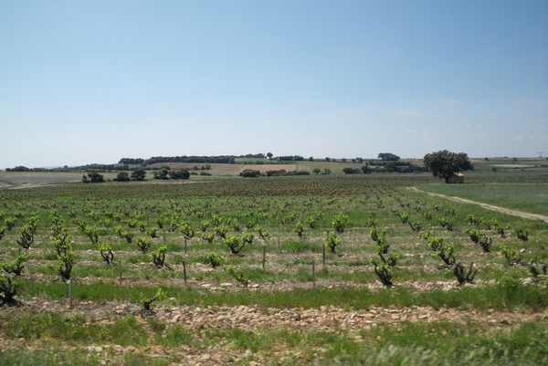 Vinorodna dežela