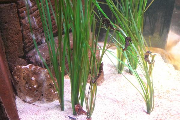 Svet morskih konjičkov