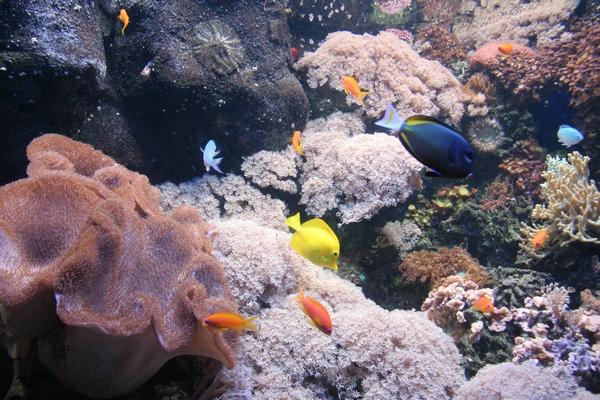 Tropske ribice
