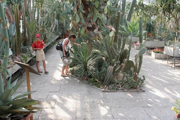 Rastlinjak s kaktusi