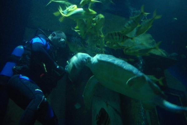 Potapljač in želva