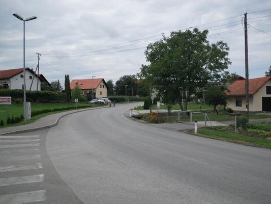Boreci