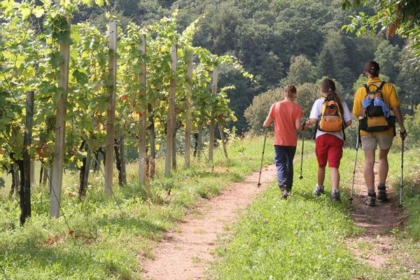Vinograd nad vasjo Hrastek