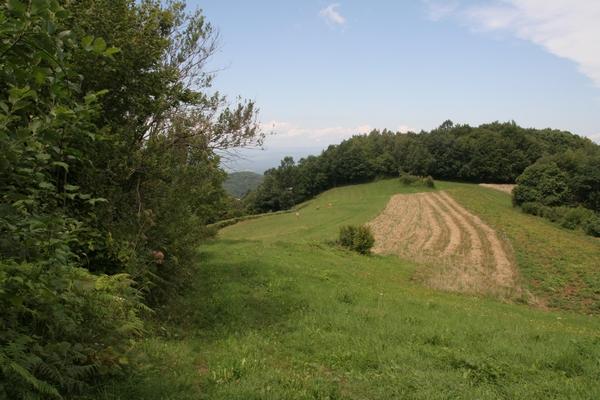 Travniki pod Planino