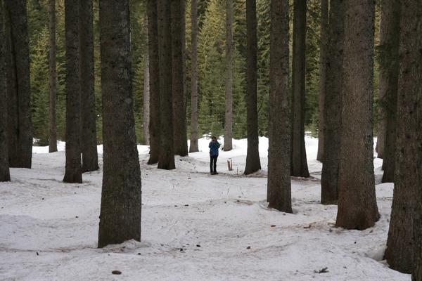 Sredi pokljuških gozdov