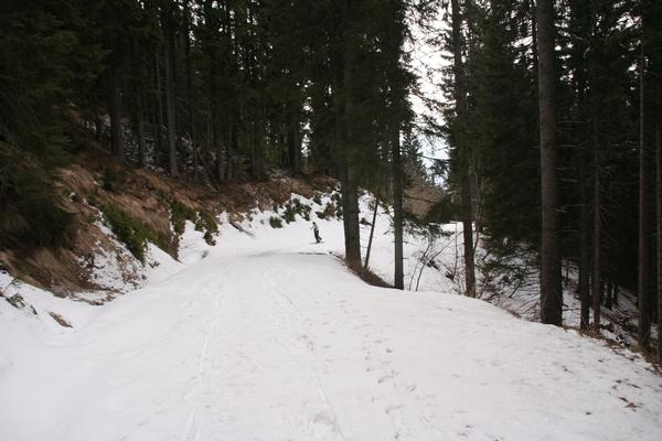 Na gozdni poti