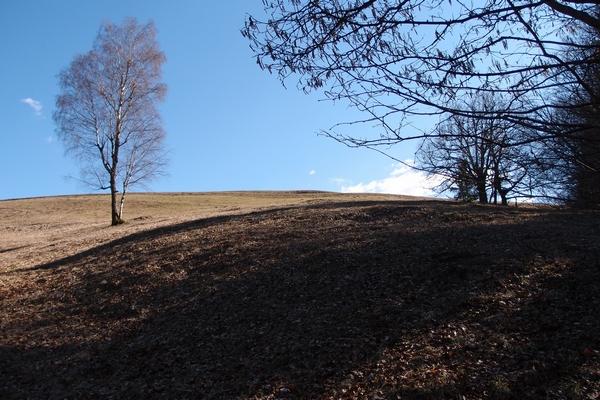 Na robu travnika