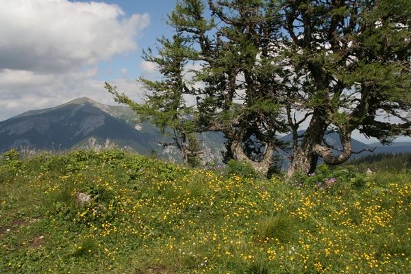 Pogled v smeri Schneeberga