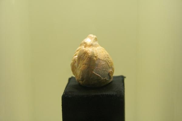 Največja fosilna perla